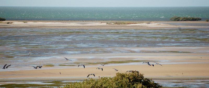 Memorandum Of Understanding Banc Darguin Wadden Sea Wadden Sea