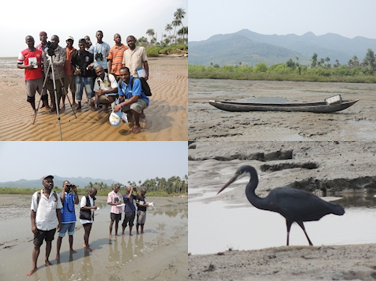 Conservation of waterbirds and wetlands in the coastal zone, Kent, Sierra Leone 2013. Tim Dodman.